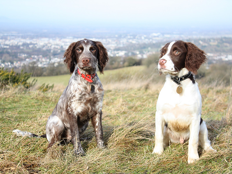 9 Dog Friendly Visitor Attractions in the Cotswolds