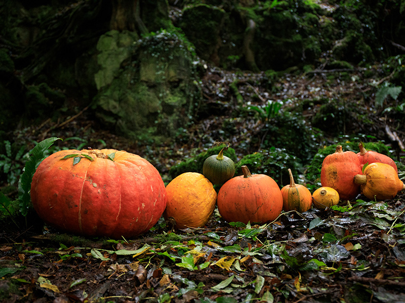 REVIEW: Pumpkins and Leaves at Puzzlewood
