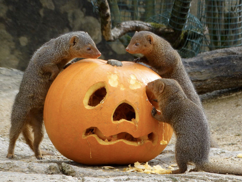 Animals at Cotswold Wildlife Park get into the Halloween spirit