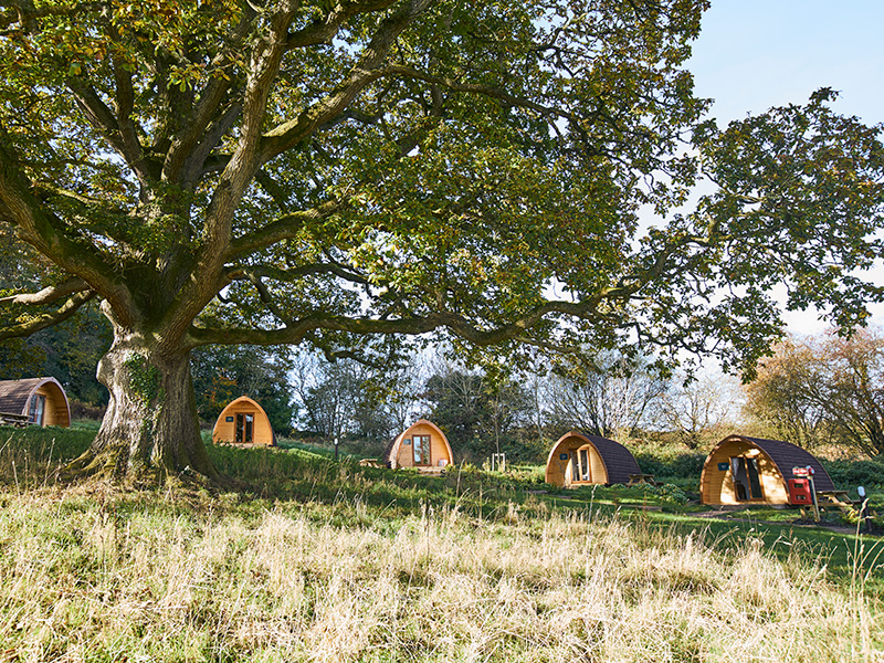 Save up to 25% on your summer holiday at Whitemead Forest Park