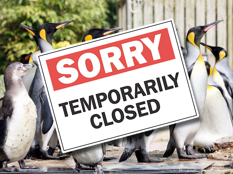 Temporary Closure of Birdland in Bourton-on-the-Water, Cotwolds