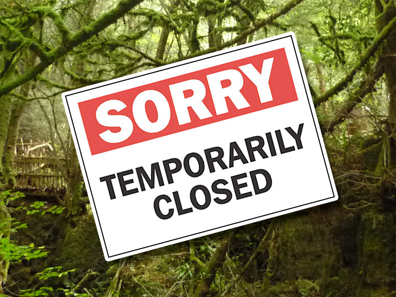 Coronavirus Temporary Closure: Puzzlewood in the Forest of Dean