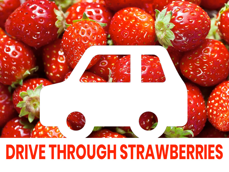 Drive-Through Strawberries at Primrose Vale