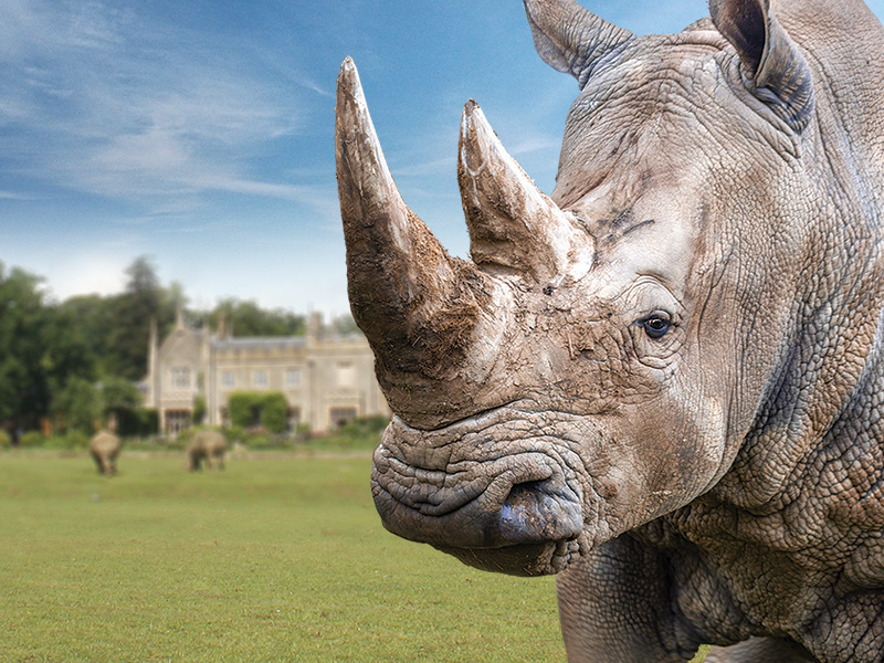 Rhinos at Cotswold Wildlife Park