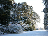 Winter wonderland at Westonbirt Arboretum