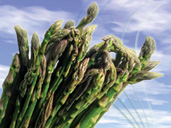 British Asparagus in Gloucestershire