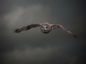 Winter Owl Evenings return to The International Centre for Birds of Prey Centre at Newent