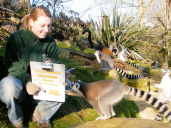 The BIG animal count at Cotswold Wildlife Park