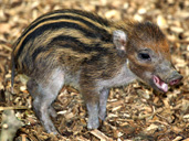 Cotswold Wildlife Park new arrival