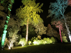 See Westonbirt's trees in a new light this Christmas!