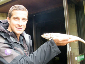 Bear Grylls opens new enclosure at Cotswold Wildlife Park