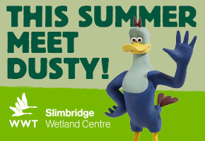 Dusty the Duck at WWT Slimbridge