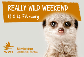 Really Wild Weekend at WWT Slimbridge Gloucestershire