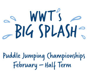 Puddle Jumping at WWT during February Half Term School Holidays