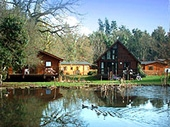 Whitemead Forest Park - Cabins & Lodges