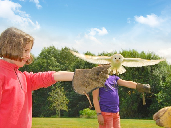 Childrens Birthday Parties at the International Centre for Birds of Prey