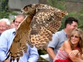 Cotswold Falconry Centre
