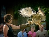 International Centre for Birds of Prey